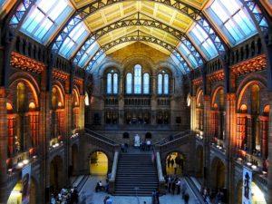 natural-history-museum-545186_640